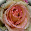 Rose by GOSIA GRZYBEK
