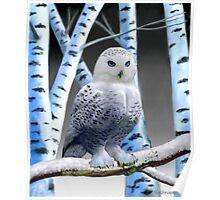 BLUE-EYED SNOW OWL Poster