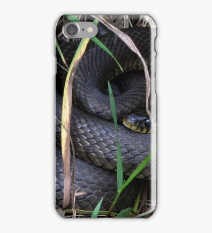 A Ringed Snake iPhone Case/Skin