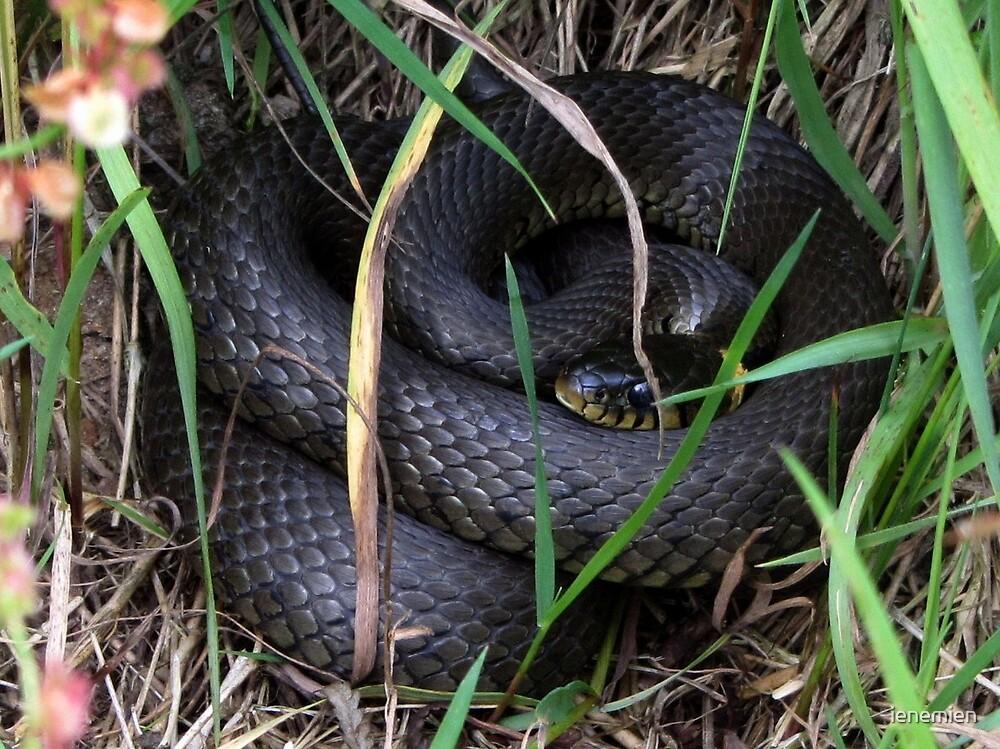 A Ringed Snake by ienemien