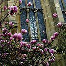 Magnolias by Segalili