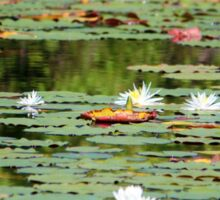 Waterlilies In The Morning Sticker