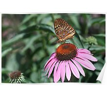 Coneflower and Friend Poster