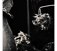 Dead Flowers and Glass #2 Photographic Print