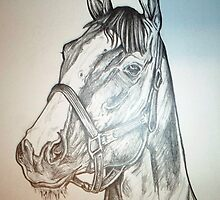California Chrome, Kentucky derby drawing by RobCrandall