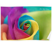 Multicoloured Rose  Poster