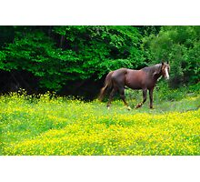 Buttercup Trot Photographic Print
