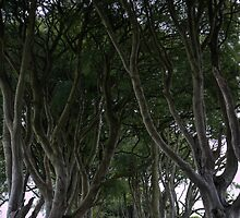 The Dark Hedges by rosscaughers