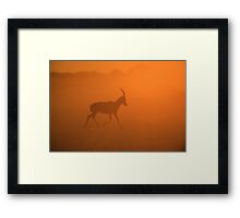 Blesbok Gold - African Wildlife and Sunset Background Framed Print