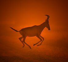Red Hartebeest - Flight of the Free - African Wildlife by LivingWild