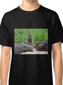 seal sea lion Classic T-Shirt