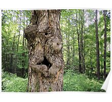 knotted maple Poster