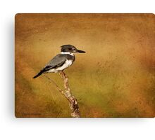 Belted Kingfisher Canvas Print