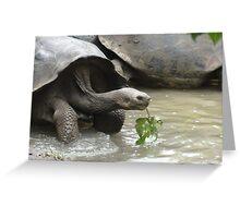 Galapagos turtule, Galapagos tortoise Greeting Card