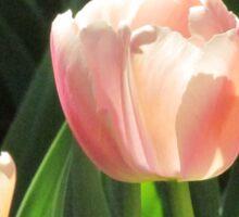 Apricot tulip Sticker