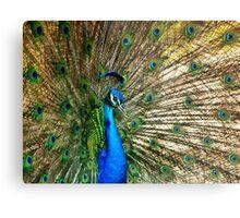 Blooming Peacock Metal Print