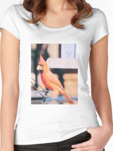 Male Cardnial, Women's Fitted Scoop T-Shirt