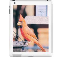 Male Cardnial, iPad Case/Skin