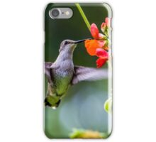 Broad-tailed Hummingbird - Utah iPhone Case/Skin