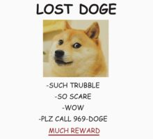 Lost DOGE by evanmayer