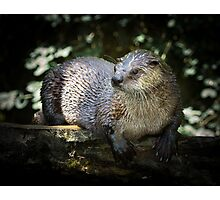 River Otter Photographic Print