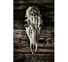 In the Woodshed Photographic Print