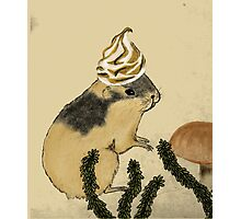 Arctic Lemming With Meringue Hat Photographic Print