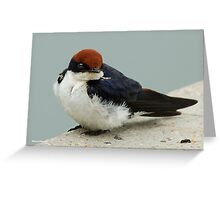 WIRE TAILED SWALLOW – Hirundo smithii - DRAADSTERT SWAEL Greeting Card