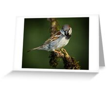 House Sparrow Greeting Card