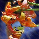 tulip petals dance by cherie hanson