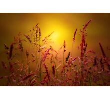 JUST A SUMMER DREAM Photographic Print