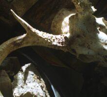 10-Point Buck Skull Sticker