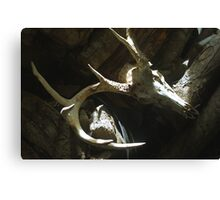 10-Point Buck Skull Canvas Print