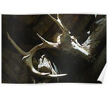 10-Point Buck Skull Poster