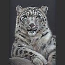 Snowleopard by Nicole Zeug