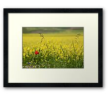 Red poppy in a yellow field Framed Print