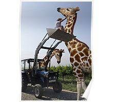 Tickle A Giraffe Poster