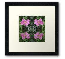 Dog roses in reflect Framed Print