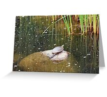 My First Turtle! Greeting Card
