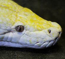 A Perfect Python by Heather Friedman