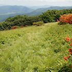 blooming in the Smokies by dc witmer