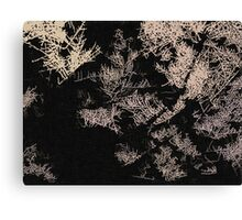 Forest trees at night Canvas Print