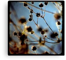 Cool Breeze - TTV Canvas Print
