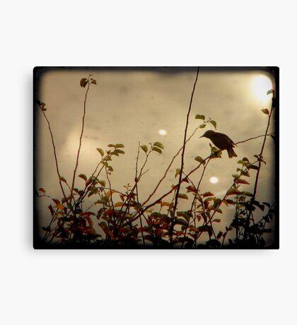 Bird in the Bush Canvas Print