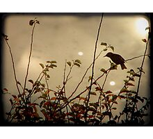 Bird in the Bush Photographic Print