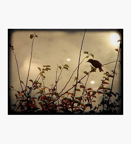 Bird in the Bush Photographic Print