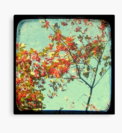 Look Up and Back Canvas Print