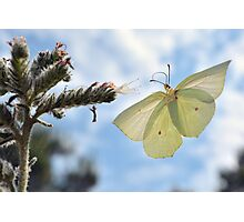 Butterfly is having breakfast Photographic Print