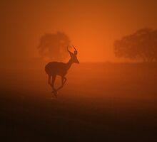 Impala - African Wildlife Background - Golden Dust by LivingWild