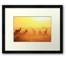 Red Hartebeest - Golden Symmetry - African Wildlife Framed Print
